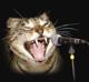 kimcat en tant qu'invité